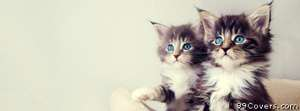 cute kittens Facebook Cover Photo