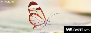 transparent wings butterfly Facebook Cover Photo