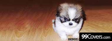 cute dogs funny puppy puppies facebook pictures Facebook Cover Photo