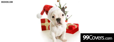 cute christmas puppy Facebook Cover Photo
