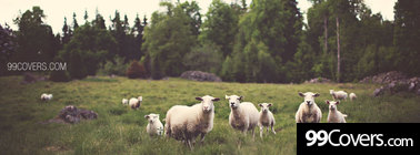 sheep Facebook Cover Photo