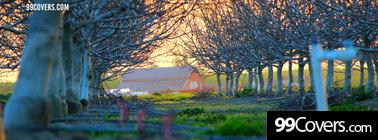 trees barn Facebook Cover Photo