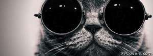 cool cat Facebook Cover Photo