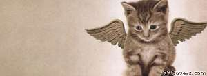 angel kitty Facebook Cover Photo