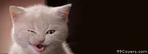 kitty stink eye Facebook Cover Photo