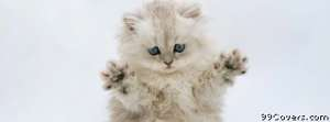 ninja kitty Facebook Cover Photo