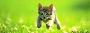running kitty Facebook Cover Photo