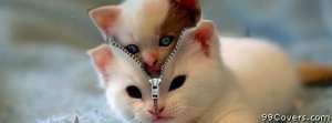 spy kitty Facebook Cover Photo