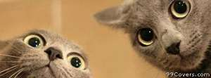 two faced cats Facebook Cover Photo