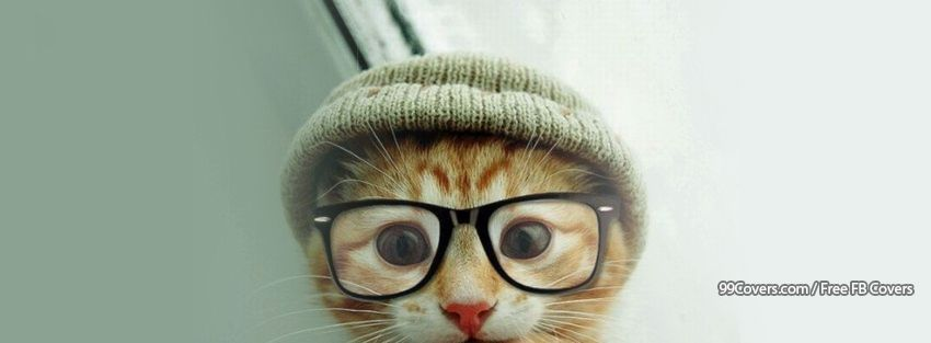 Cat Hat Glasses Facebook Cover Photos