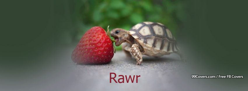 Rawr Turtle Facebook Cover Photos