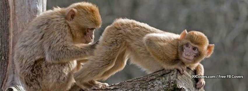 Monkeys Funny Facebook Covers