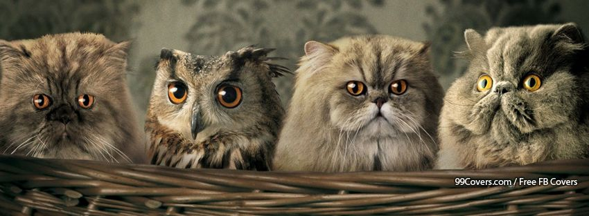 Cute Animals Funny Sweet Facebook Cover Photos