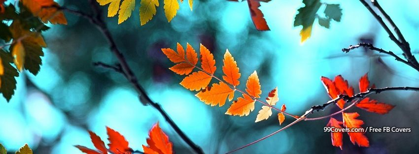 Facebook Cover Photos Autumn Leaves Background 18 Facebook