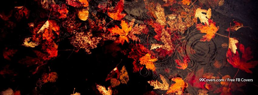 Facebook Cover Photos Autumn Leaves Background 12 Facebook