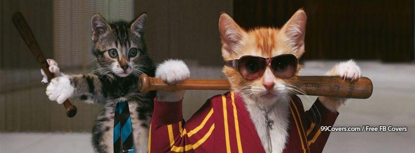 Funny Cats Facebook Cover Photos