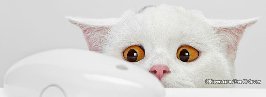 Funny Cat 4 Facebook Cover Photos