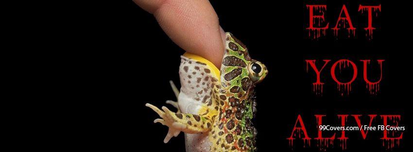 Funny Frog 4 Facebook Cover Photos