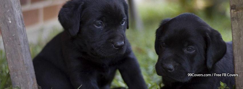 Funny Dogs Facebook Cover Photos