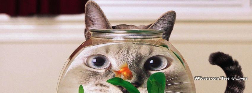 Funny Cat 12 Facebook Cover Photos