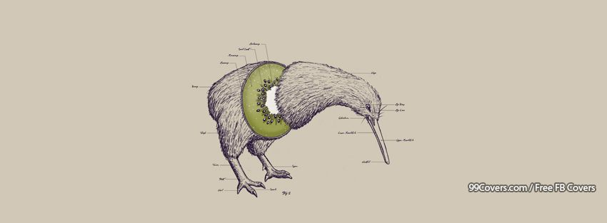 Funny Bird Fruit Kiwi Facebook Cover Photos