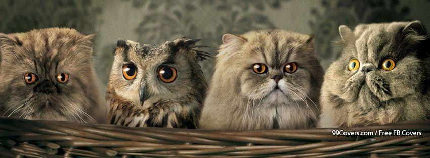 Nice Try Owl Facebook Cover Photos