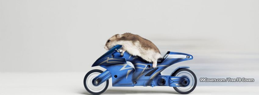 Funny Hamster Riding Motorbike Facebook Cover Photos
