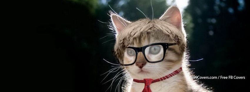 Hipster Nerd Cat Facebook Cover Photos