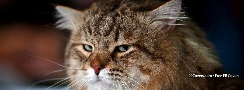 Funny Cat 13 Facebook Cover Photos