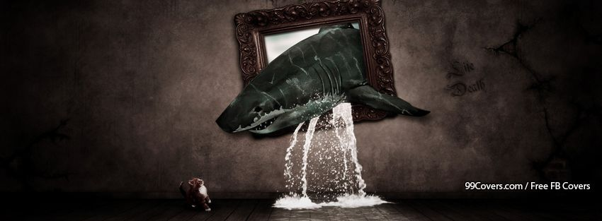 Funny Shark With A Cat Facebook Cover Photos