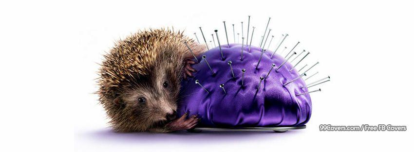 Funny Hedgehog Facebook Cover Photos