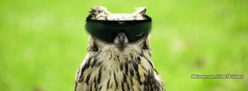 Funny Owl Facebook Cover Photos