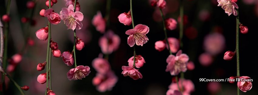 Facebook Cover Photos Flowers Pink Spring Facebook Cover Photos