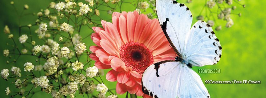 Peach Flower Blue Buterfly Pictures
