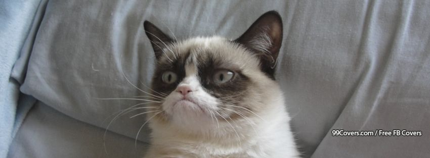 Grumpy Cat Photos
