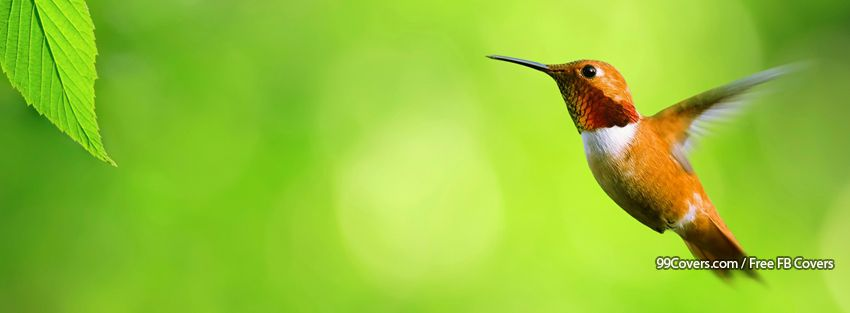 Hummingbird Facebook Cover Images