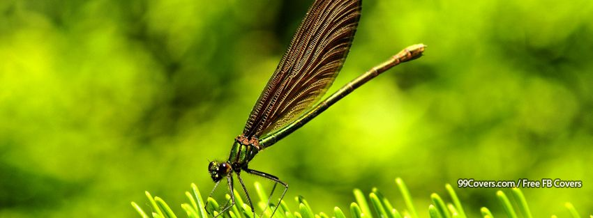 Dragonfly Cover Photos For Facebook Timeline