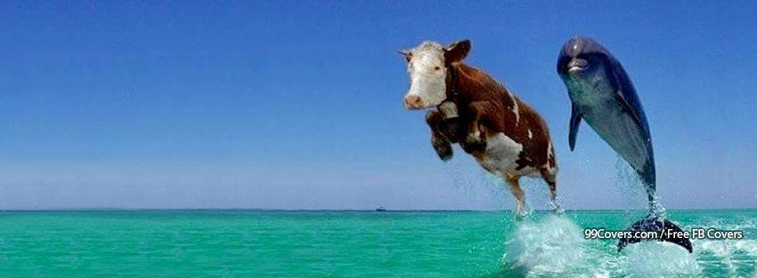 Cow Dolphin Facebook Cover Photos