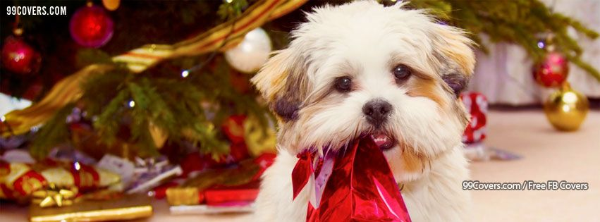 Facebook Cover Photos Cute Dog Christmas Tree Pictures