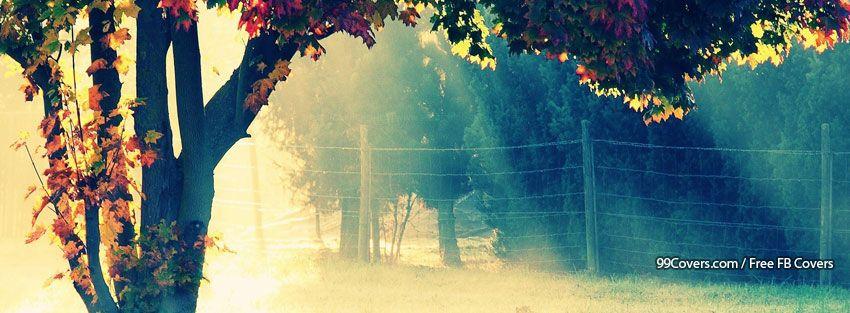 Autumn Trees Facebook Cover Photos