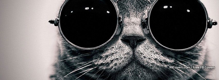 Cool Cat Pictures
