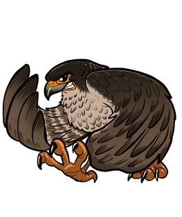 Falcon mascot color