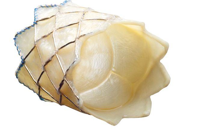 Cardiovascular implants