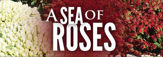 A Sea of Roses to Fatima