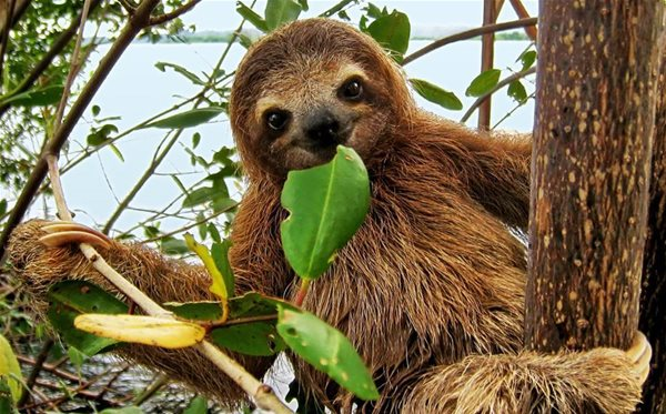 See a sloth at the Auburn-Opelika Wildlife Festival on Aug. 2-3