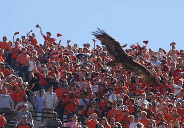 New eagle takes flight at Auburn University