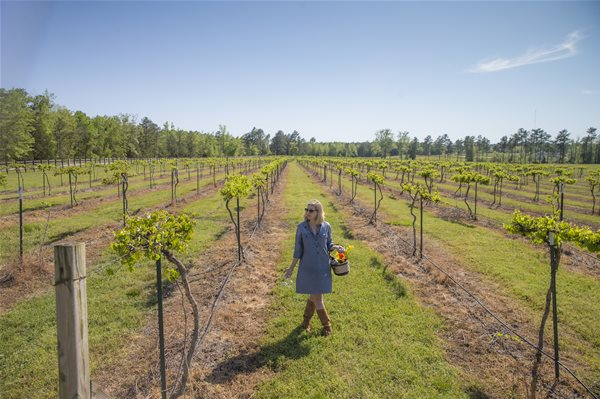 3rd Annual Auburn-Opelika Wine Trail set for Oct. 25
