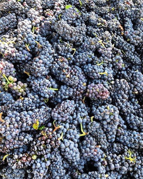 3rd Annual Auburn-Opelika Wine Trail set for Oct. 25