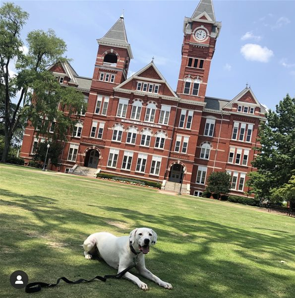 Dog-Friendly Places in Auburn-Opelika