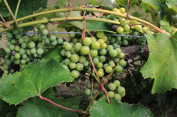 Auburn-Opelika Wine Trail 2017